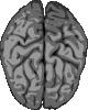 Grey_Brain_clip_art_small