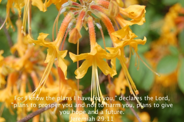flowers jeremiah29 11